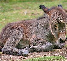 Little Donkey Don't be Sad !!! by AnnDixon