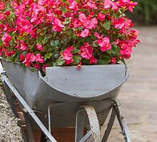 wheelbarrow with flowers by spetenfia