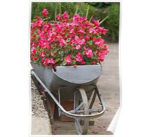 wheelbarrow with flowers Poster