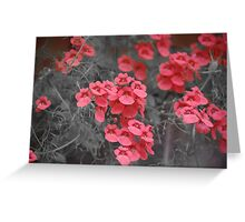 Salmon Pink Flowers Greeting Card