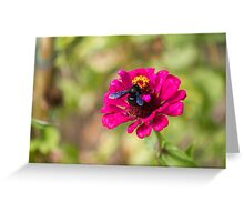 bluebottle on flower Greeting Card