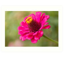 flower in the garden Art Print
