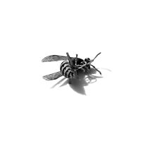 wasp 01 by andley