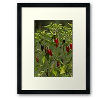 red and blue chili Framed Print