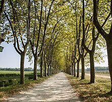 Sauternes,  a road between vineyards  by 29Breizh33