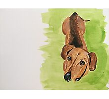 Ludwig the dashingly handsome Dachshund  Photographic Print
