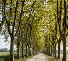 Sauternes,  a road between vineyards  Sticker