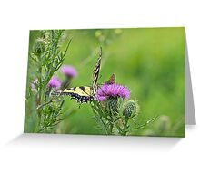 Tiger Swallowtail And Skipper Butterflies On Thistle Greeting Card
