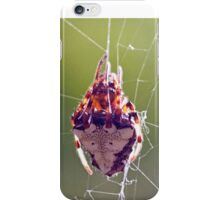 Triangulate Orb Weaver iPhone Case/Skin