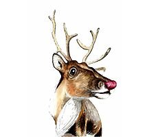 Rudolf the red nosed Reindeer Photographic Print