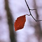 """"""" Last Leaf To Fall """" by Richard Couchman"""