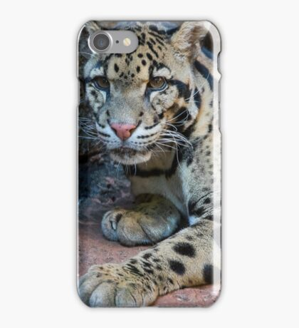 The Elusive Clouded Leopard iPhone Case/Skin