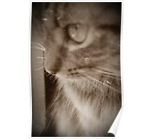 Vintage Look Cat Poster