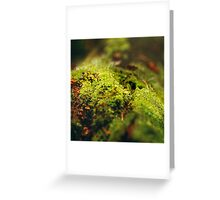 Moss Close Up View with Little Mushrooms Greeting Card