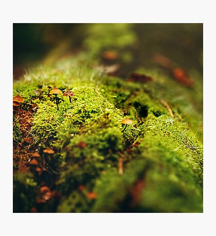 Moss Close Up View with Little Mushrooms Photographic Print