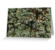 Nature Background Greeting Card