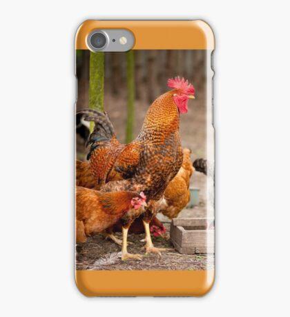 Rhode Island Red chickens iPhone Case/Skin