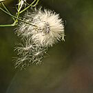 Waiting For The Wind by Rick  Friedle