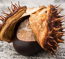 Horse Chestnut by TonyPriestley
