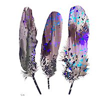 Feathers 2 Photographic Print