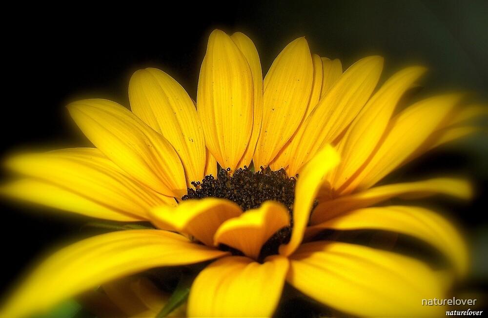 Goldilocks by naturelover