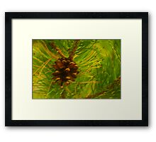 Pine Cone Framed Print