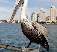 San Diego Pelican by Henrik Lehnerer