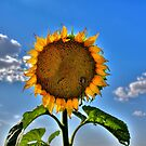 Floral Sunshine by Larry Trupp