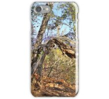 Old Balsam Poplar Tree iPhone Case/Skin