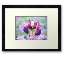 Purple Lupin Top Framed Print
