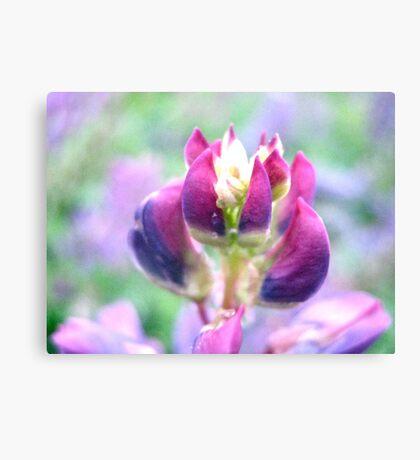 Purple Lupin Top Canvas Print