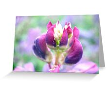 Purple Lupin Top Greeting Card