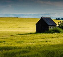 Corn fields by robertperry