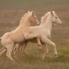 Rambunctious Colts by Kent Keller