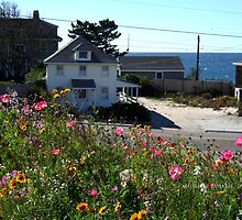 Fall Wild Flowers at the beach by Maureen Zaharie