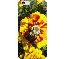 Flower and Insect Close-Up, Liberty State Park, New Jersey  iPhone Case/Skin