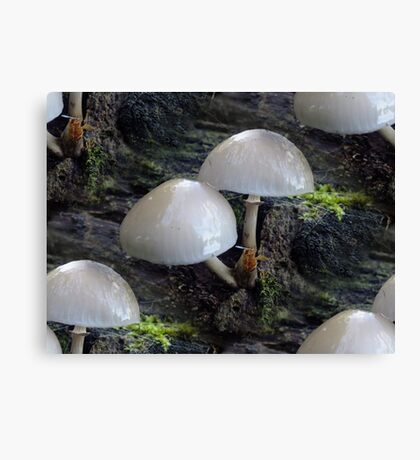 Toadstool Rows Canvas Print