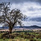 Storm tree 1 by Candice84
