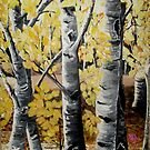 Colorado Birch by Sandy Sparks