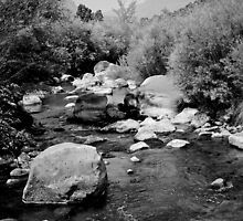 Running Water -- Rio Pueblo de Taos by Bill Wetmore