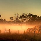Golden Morning Light by Christine Smith