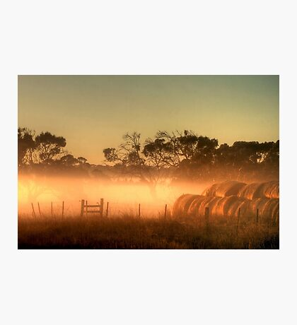 Golden Morning Light Photographic Print
