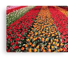 Tulips in Line Canvas Print