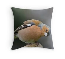 Iquisitive chaffinch Throw Pillow