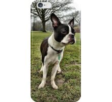 Portrait of Meryl the Boston Terrier II iPhone Case/Skin