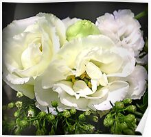 Lisianthus - Delicate & Beautiful Poster