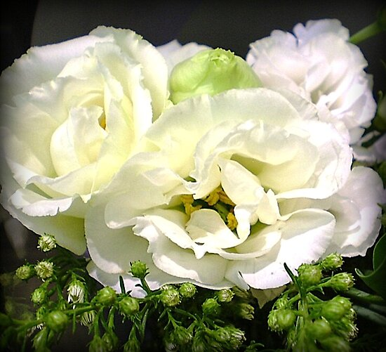 Lisianthus - Delicate & Beautiful by EdsMum