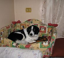 Is This Really My Own Bed  by Dennis Melling