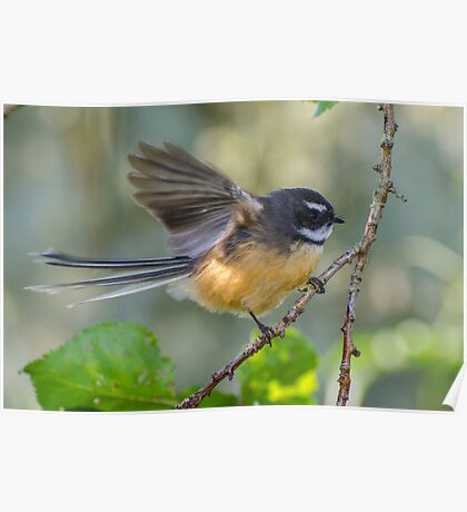 Fantail Poster
