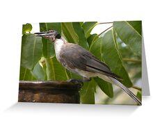 Noisy Friarbird Greeting Card